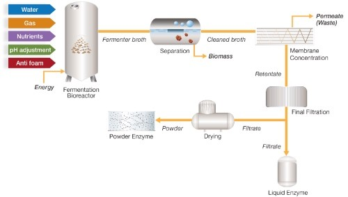 enzyme-filtration-process-flow-diagram